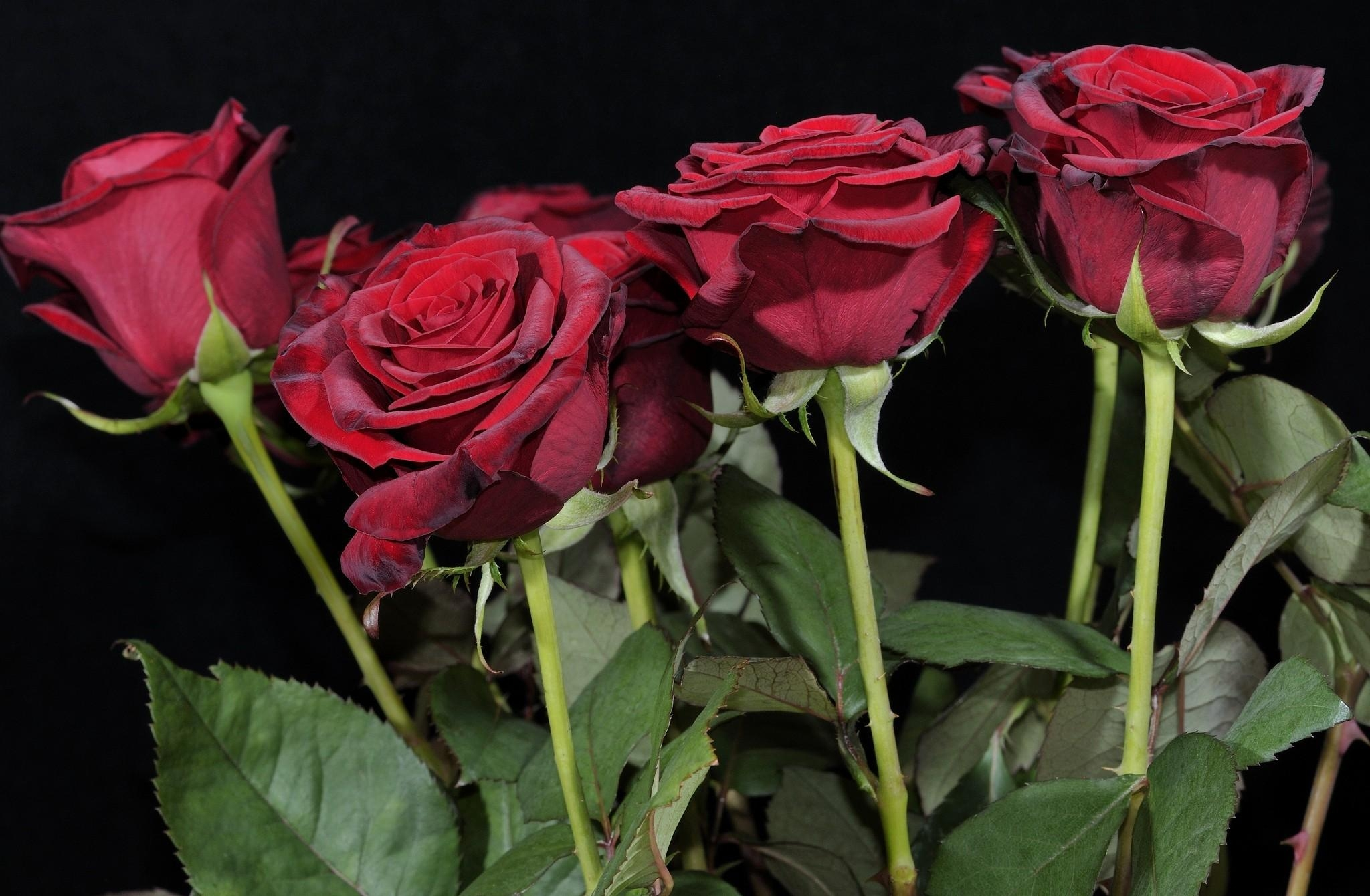 76601 download wallpaper Flowers, Bouquet, Black Background, Roses screensavers and pictures for free