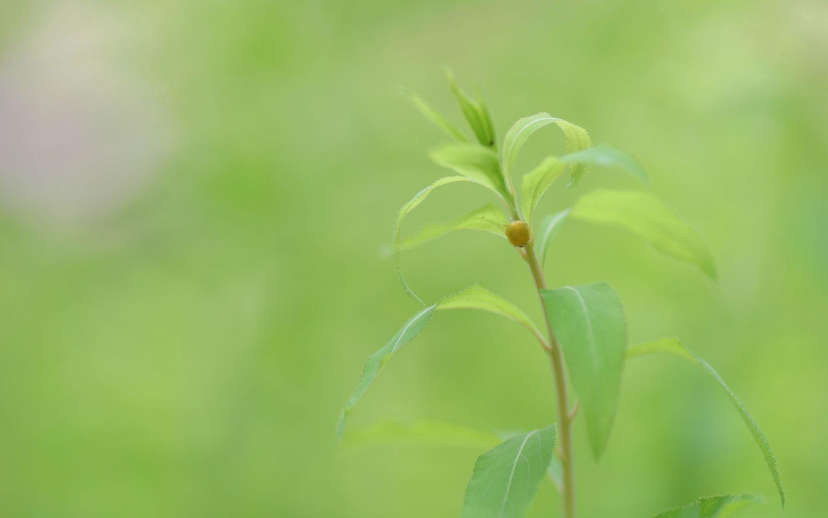139494 скачать обои Макро, Растение, Стебель, Листья, Жук, Насекомое, Зелень, Природа - заставки и картинки бесплатно