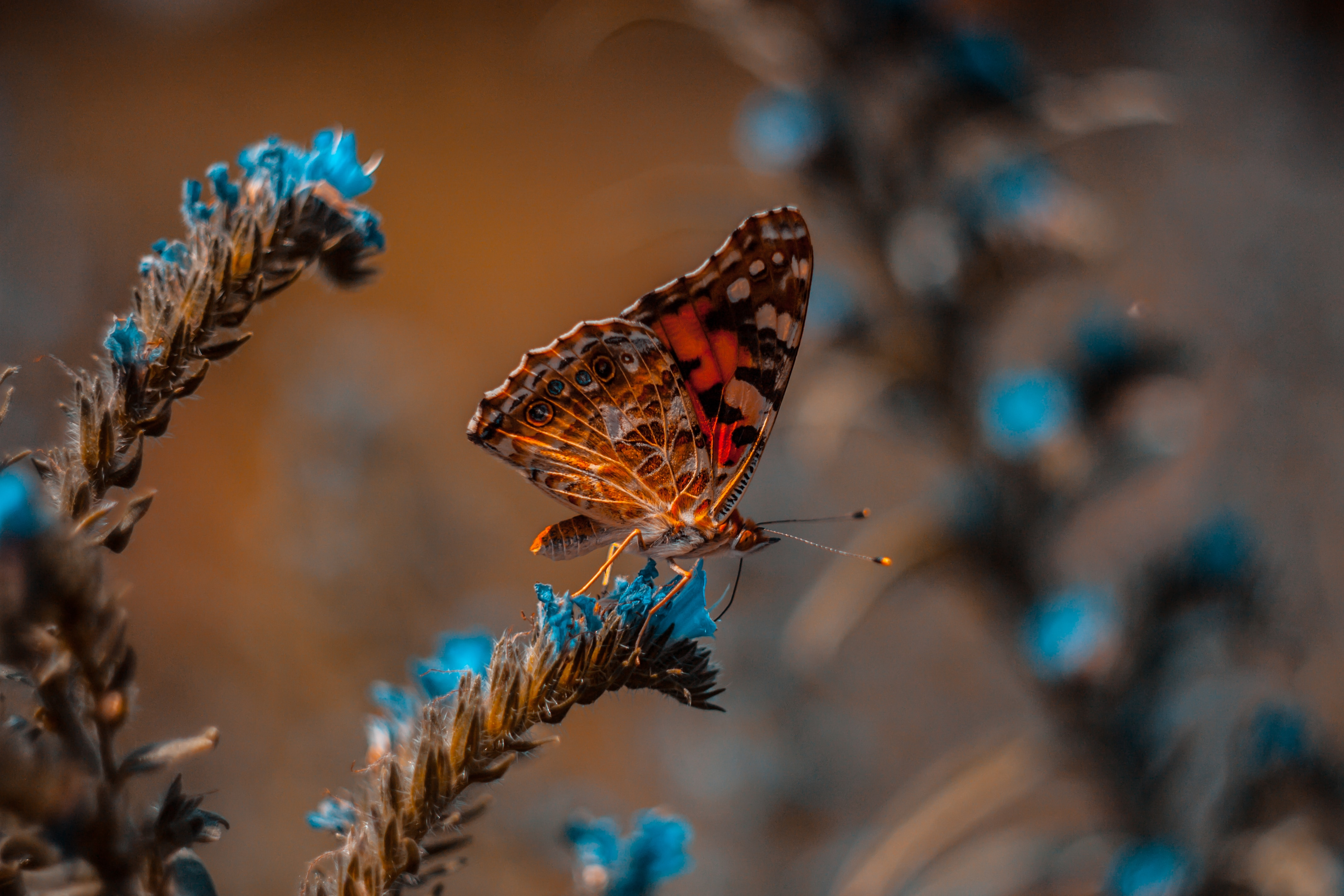 114103 download wallpaper Flower, Macro, Insect, Butterfly screensavers and pictures for free