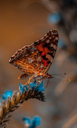 お使いの携帯電話の114103スクリーンセーバーと壁紙昆虫。 大きい, マクロ, バタフライ, 蝶, 花, 昆虫の写真を無料でダウンロード