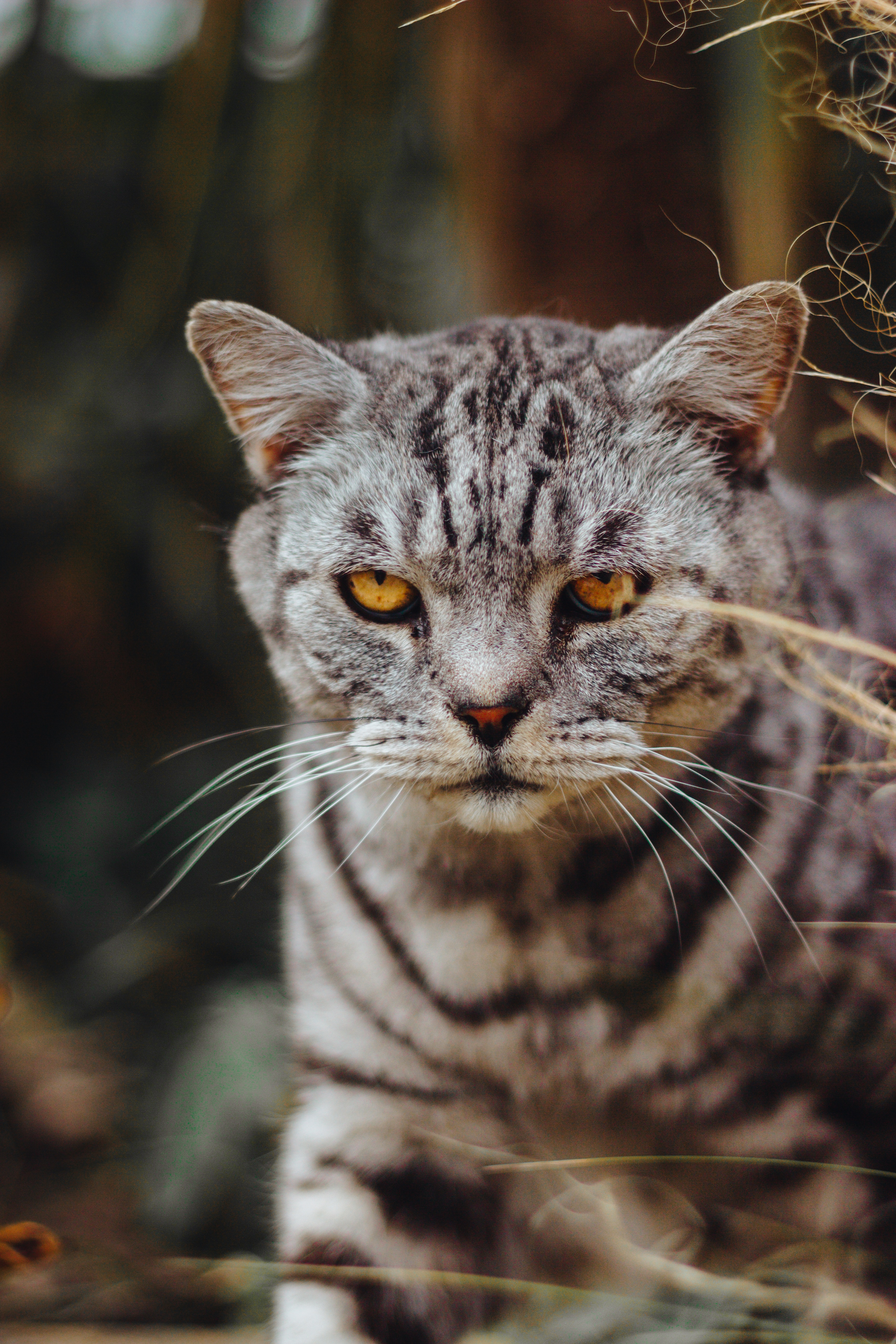 90118 download wallpaper Animals, Cat, Serious, Evil, Sight, Opinion screensavers and pictures for free
