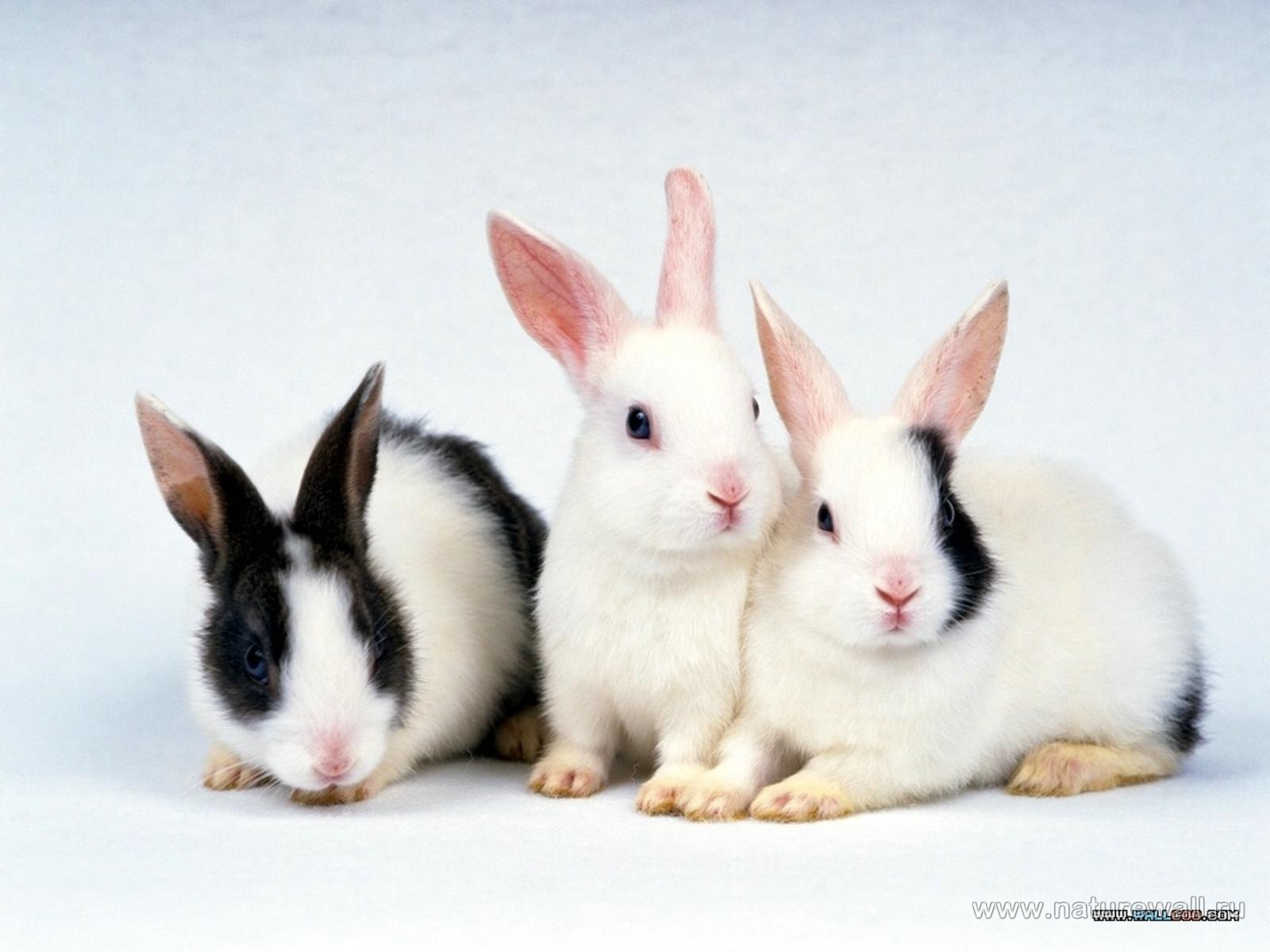 19175 Screensavers and Wallpapers Rabbits for phone. Download Animals, Rabbits pictures for free