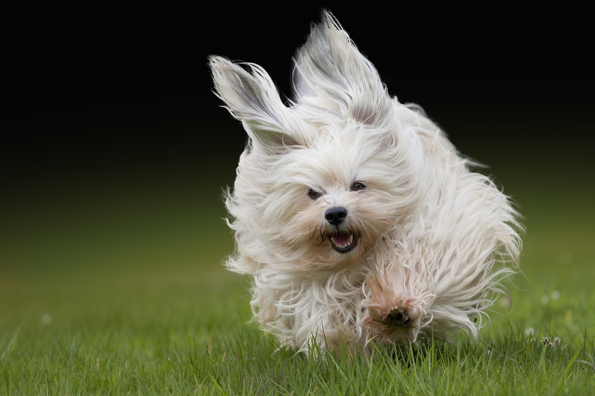 15931 download wallpaper Animals, Dogs screensavers and pictures for free