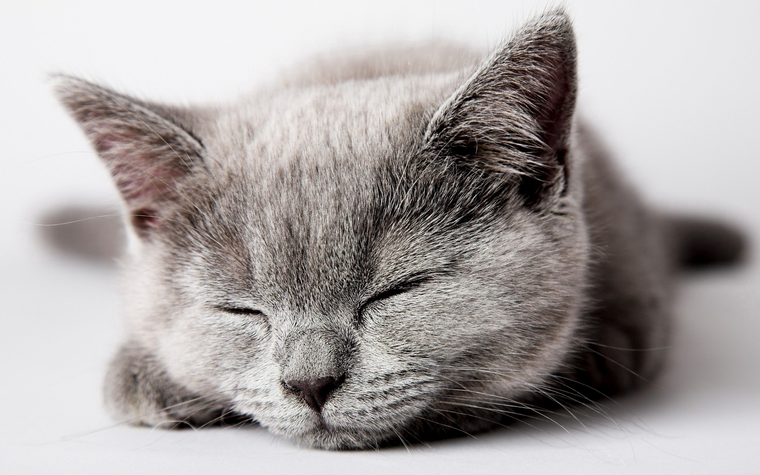 108058 download wallpaper Animals, Kitty, Kitten, Sleep, Dream, Muzzle, Nice, Sweetheart, Kid, Tot screensavers and pictures for free