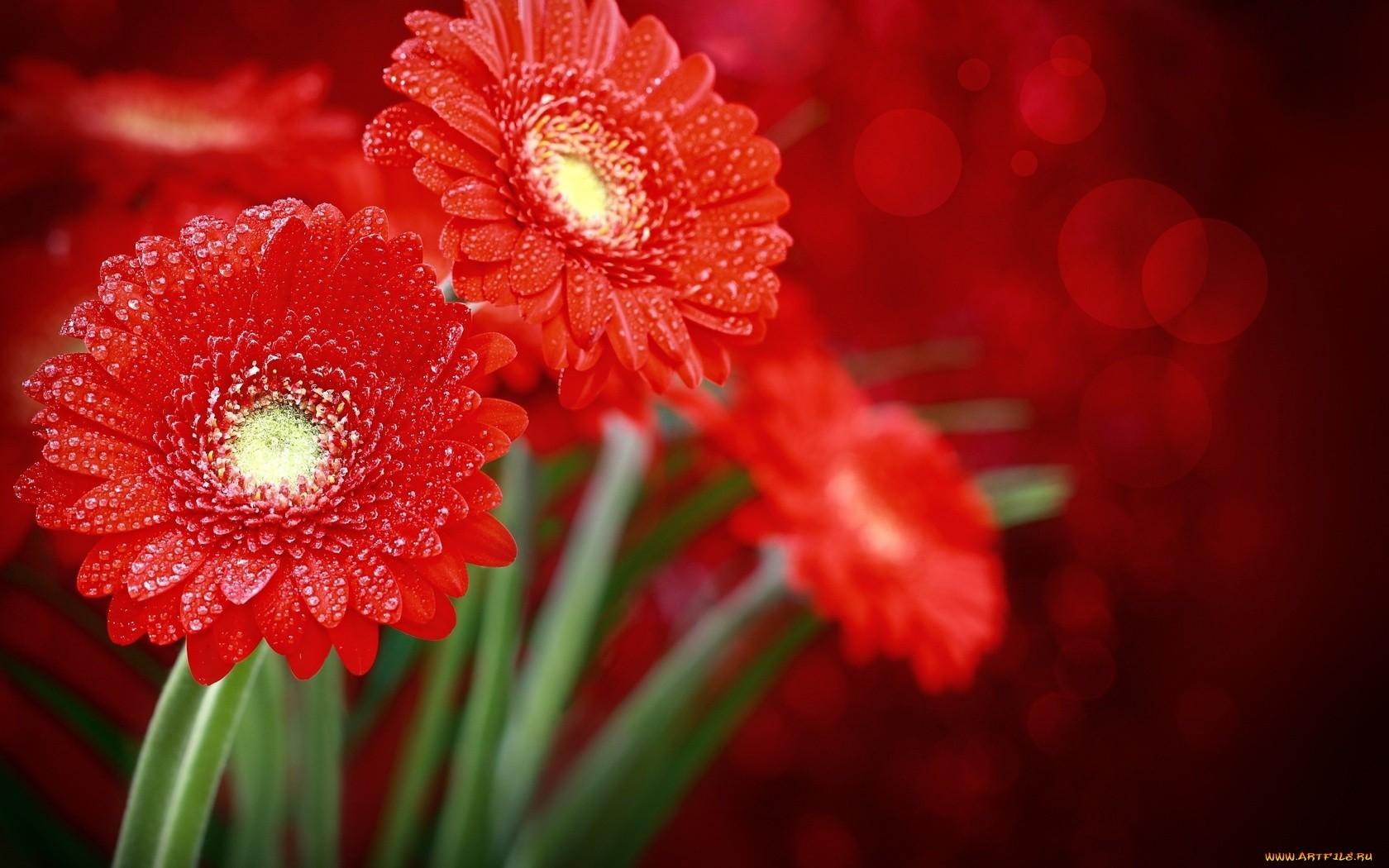 21157 скачать обои Растения, Цветы - заставки и картинки бесплатно