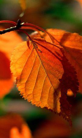 24228 скачать обои Растения, Осень, Листья - заставки и картинки бесплатно
