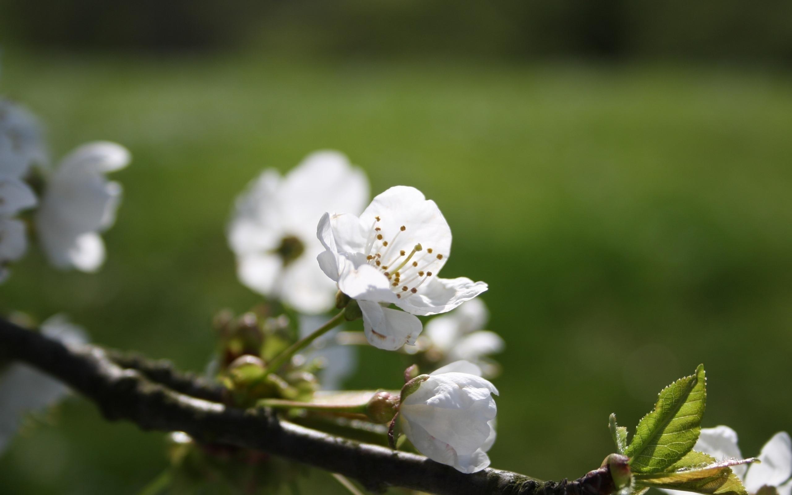 25905 скачать обои Растения, Цветы, Деревья - заставки и картинки бесплатно