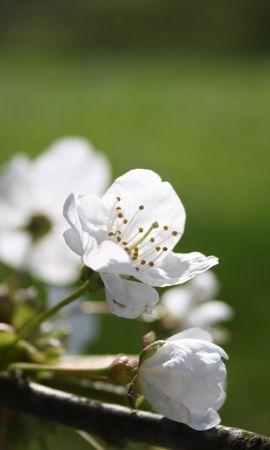25905 télécharger le fond d'écran Plantes, Fleurs, Arbres - économiseurs d'écran et images gratuitement