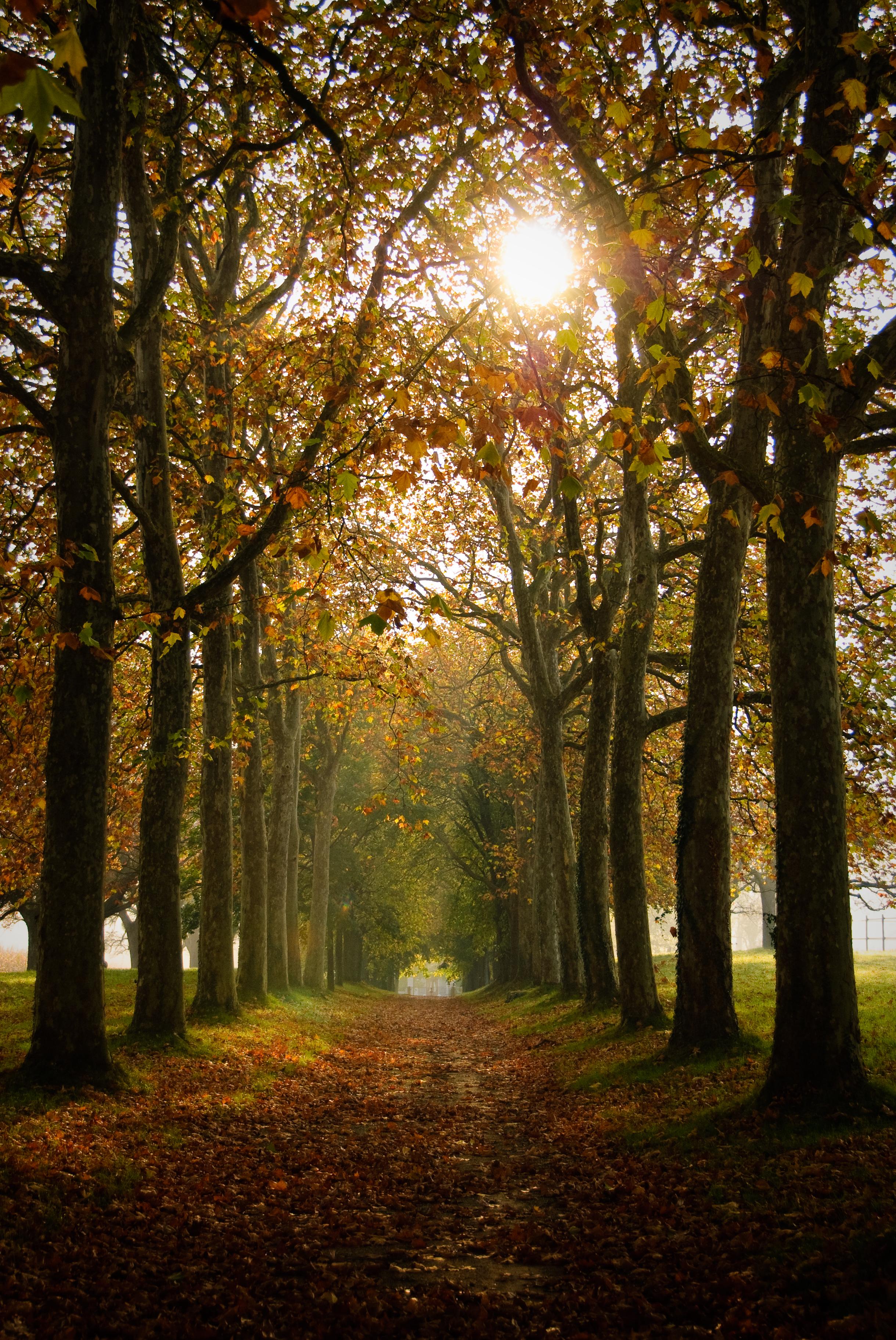 156970 Hintergrundbild herunterladen Herbst, Natur, Bäume, Gasse, Pfad - Bildschirmschoner und Bilder kostenlos