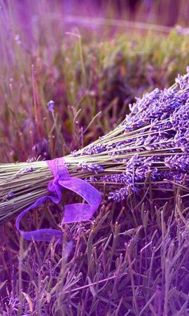 38091 descargar fondo de pantalla Plantas, Flores, Bouquets, Violeta: protectores de pantalla e imágenes gratis