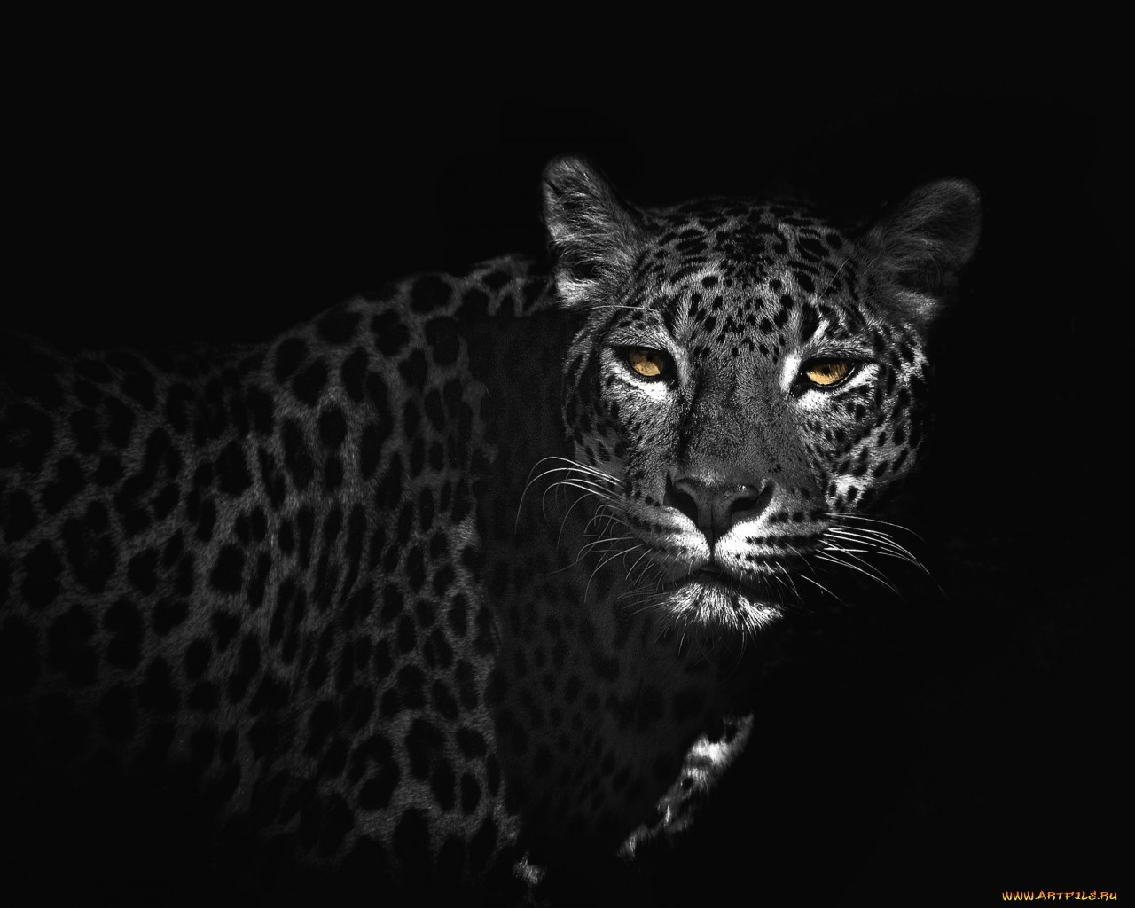 20776 download wallpaper Animals, Leopards screensavers and pictures for free