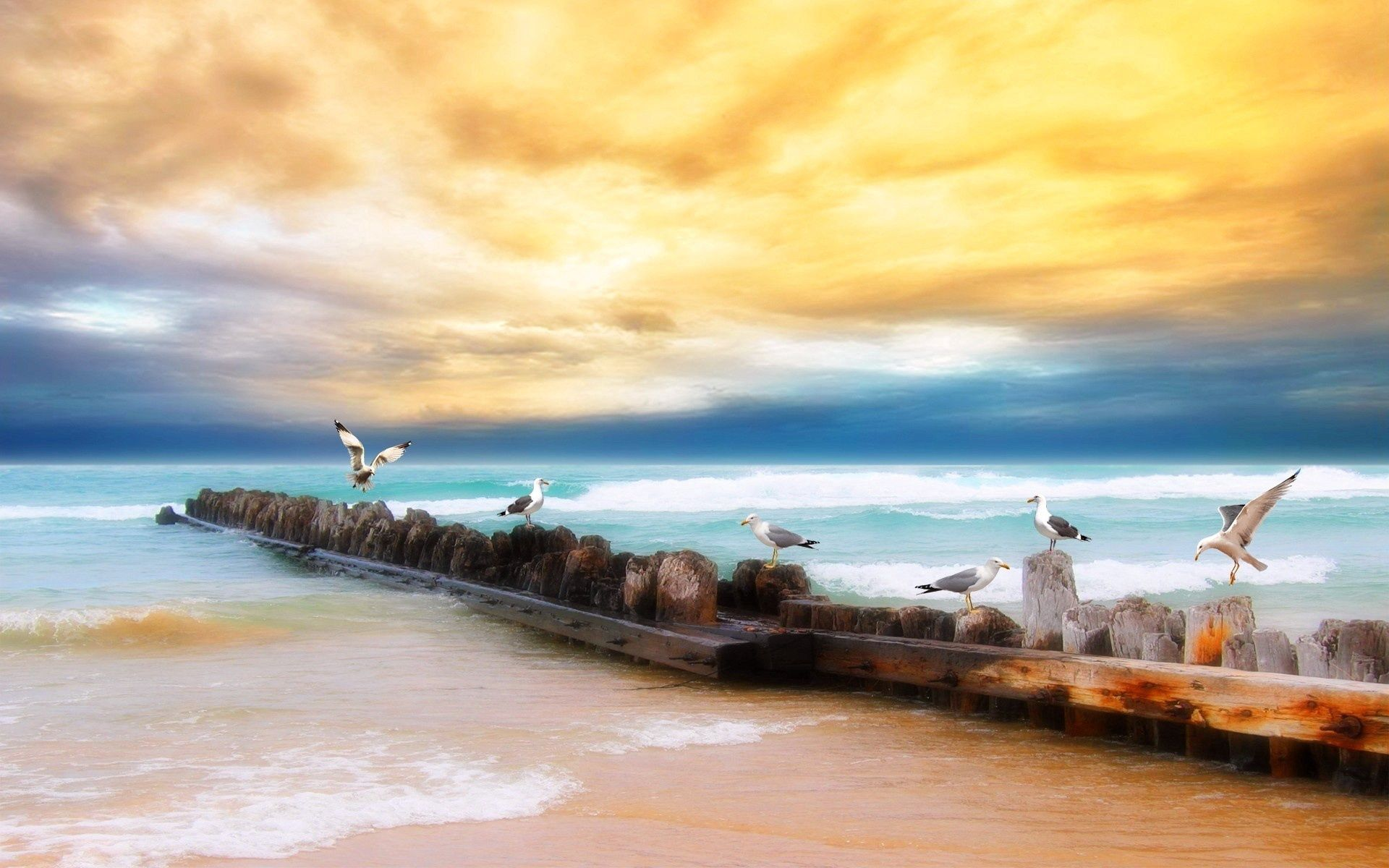115634 download wallpaper Nature, Logs, Shore, Bank, Sea, Sky, Beach, Horizon, Birds, Seagulls screensavers and pictures for free