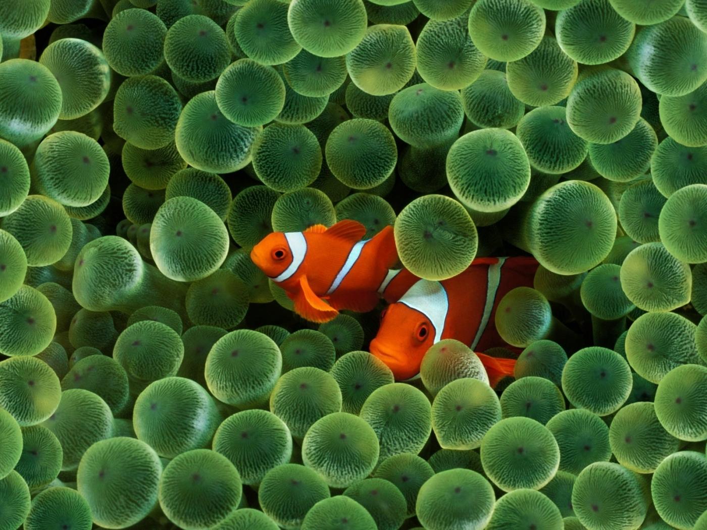 43903 Заставки и Обои Рыбы на телефон. Скачать Рыбы, Животные картинки бесплатно