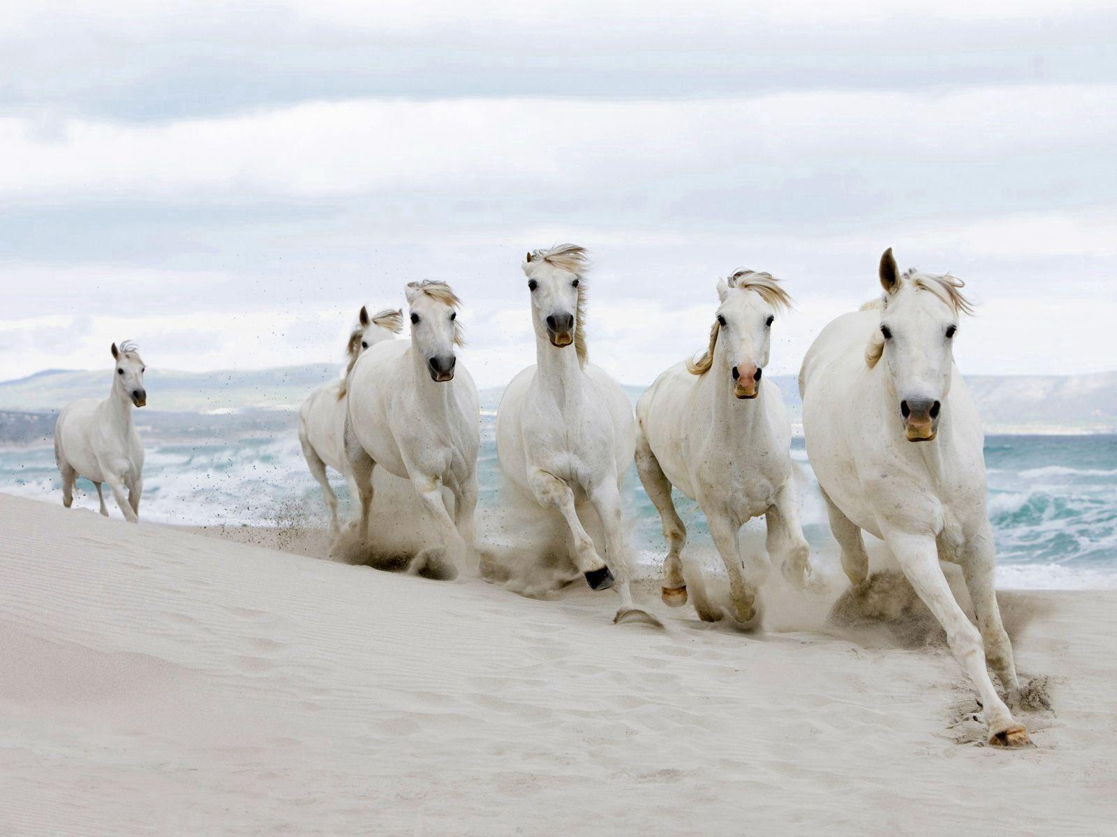 131242 скачать обои Животные, Лошади, Бег, Песок, Табун - заставки и картинки бесплатно