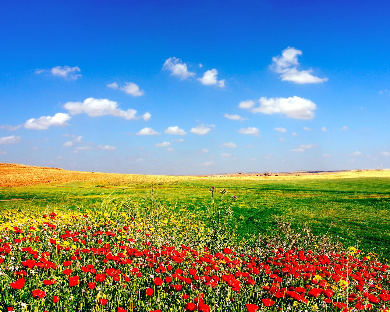 Скачать картинку Растения, Небо, Цветы, Пейзаж в телефон бесплатно.