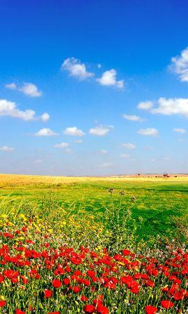 14798 descargar fondo de pantalla Plantas, Paisaje, Flores, Cielo: protectores de pantalla e imágenes gratis