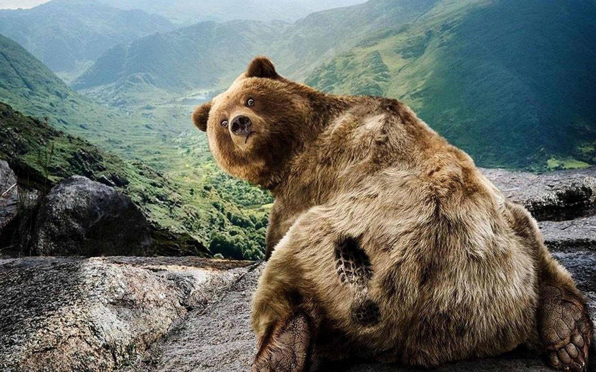 29368 Bildschirmschoner und Hintergrundbilder Humor auf Ihrem Telefon. Laden Sie Humor, Tiere, Bären Bilder kostenlos herunter