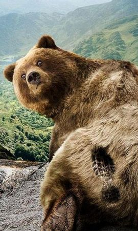 29368 download wallpaper Funny, Animals, Bears screensavers and pictures for free