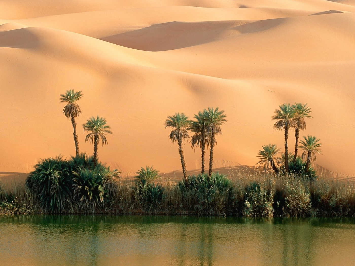 27610 download wallpaper Landscape, Sand, Palms, Desert screensavers and pictures for free