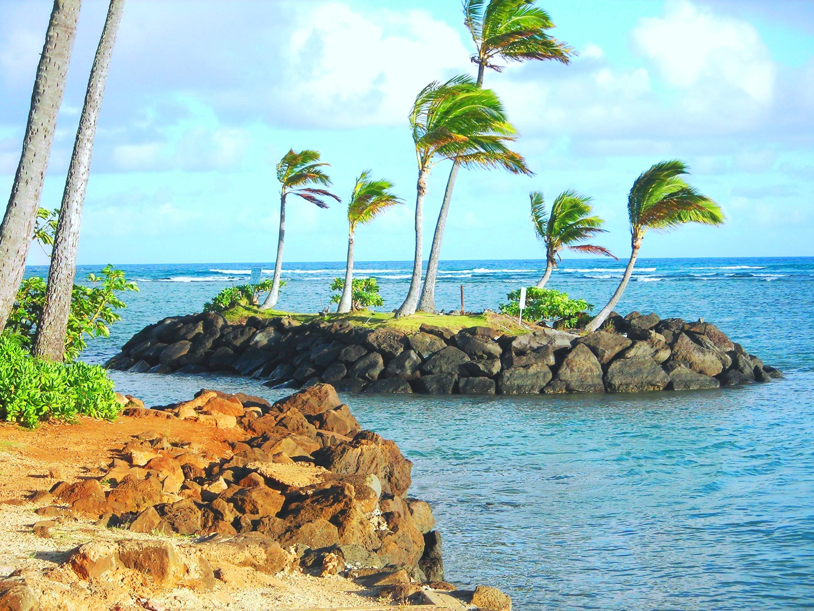 132644 download wallpaper Nature, Tropics, Island, Palms screensavers and pictures for free