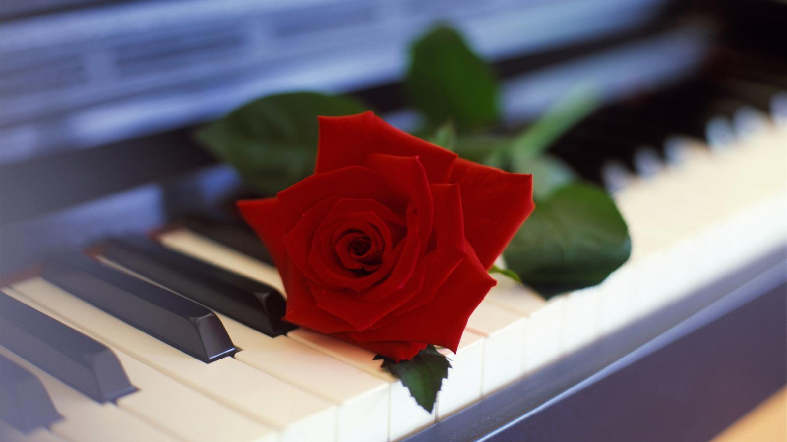 18958 скачать обои Музыка, Растения, Цветы, Инструменты, Пианино - заставки и картинки бесплатно