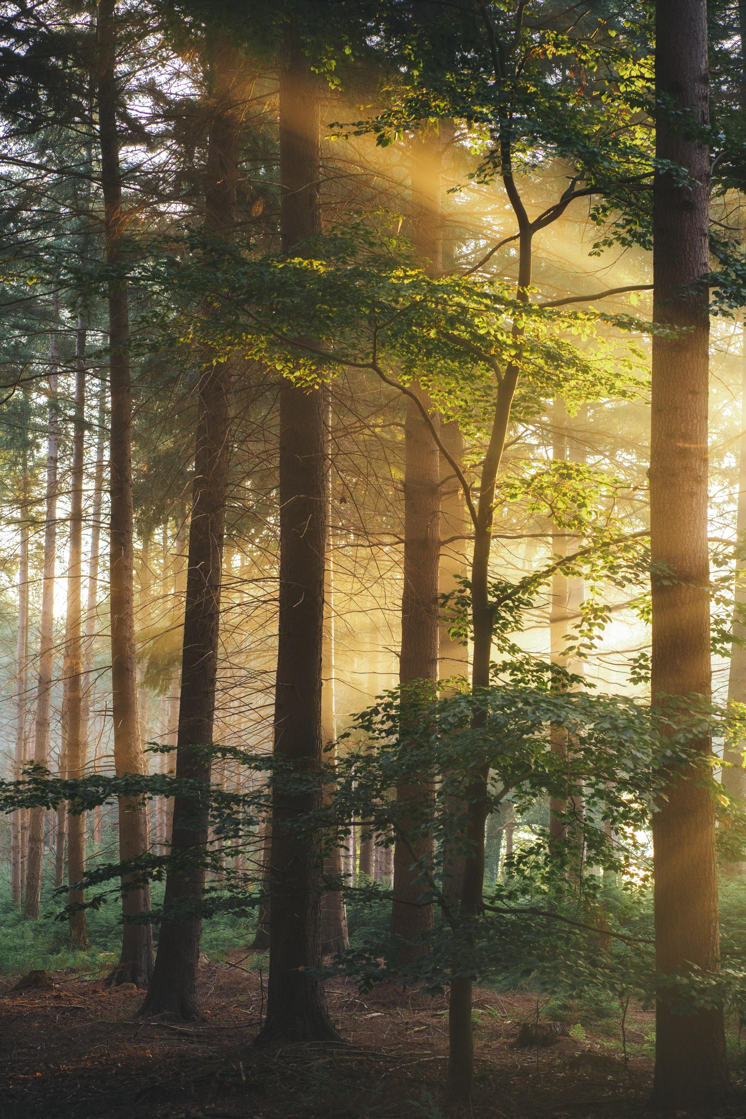 145185壁紙のダウンロード自然, 木, ブランチ, 枝, ビーム, 光線, 森林, 森-スクリーンセーバーと写真を無料で