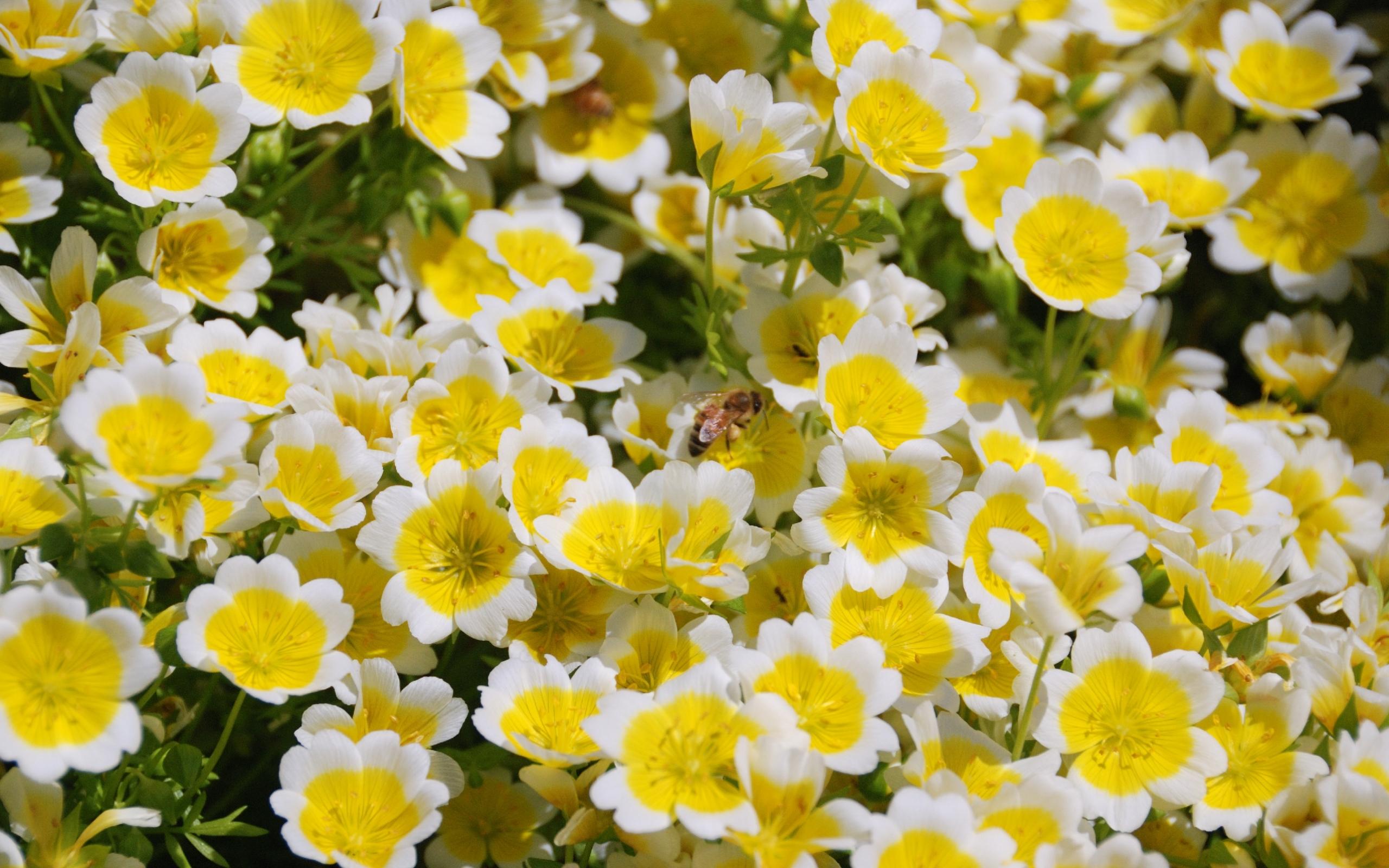 40436 Hintergrundbild herunterladen Insekten, Bienen - Bildschirmschoner und Bilder kostenlos