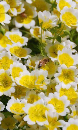 40436 télécharger le fond d'écran Insectes, Abeilles - économiseurs d'écran et images gratuitement