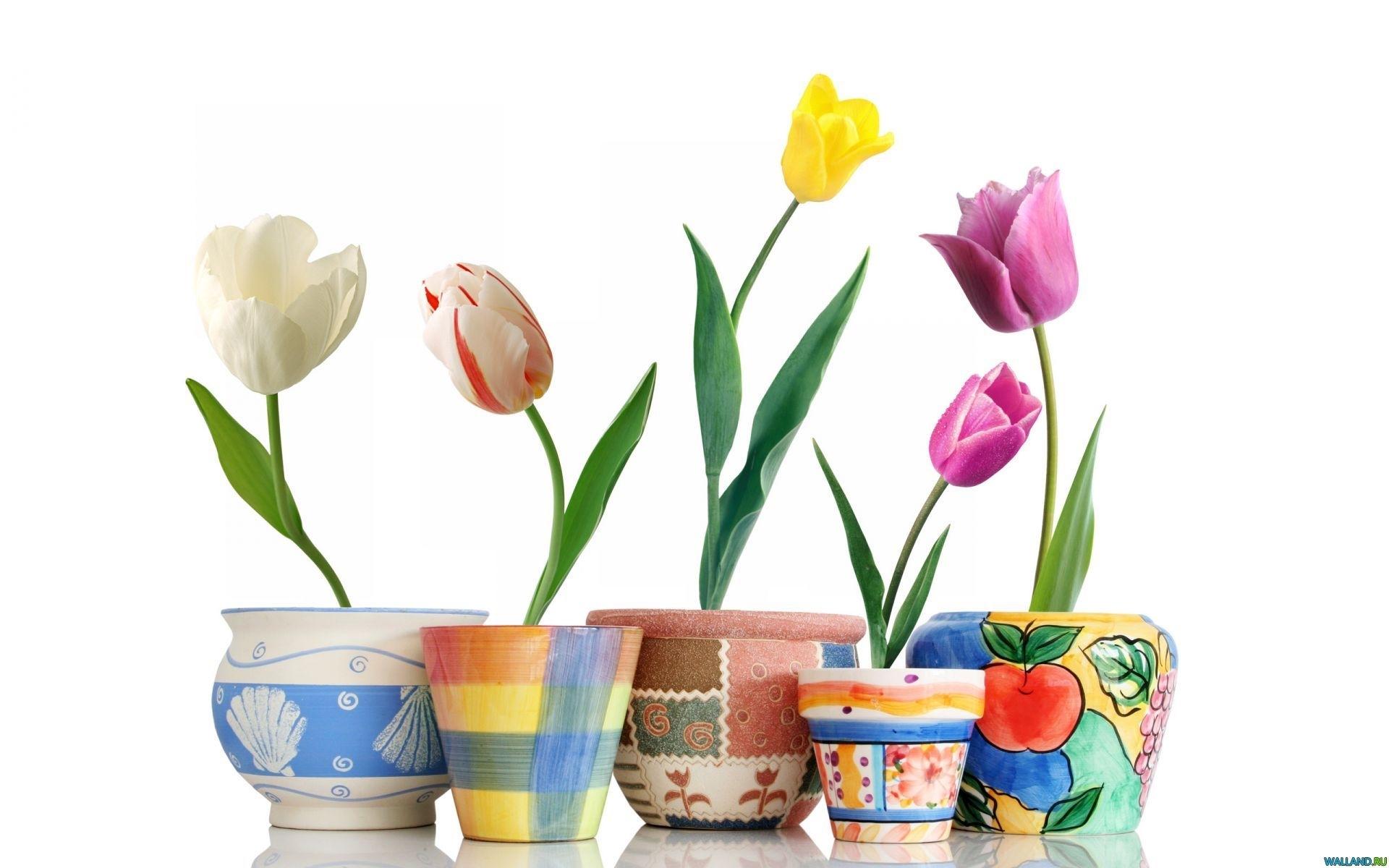 25882 скачать обои Растения, Цветы, Тюльпаны - заставки и картинки бесплатно