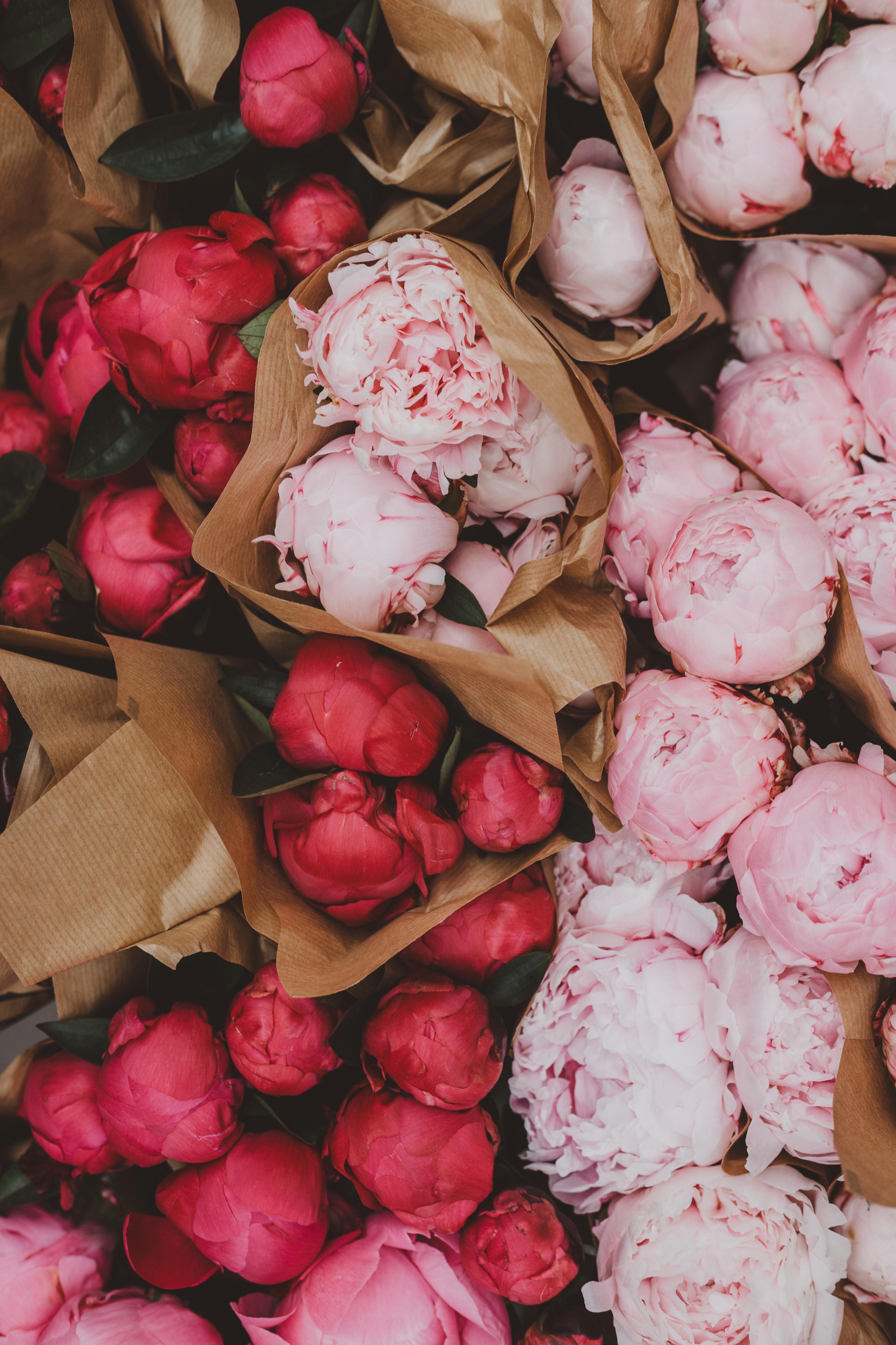 68840 télécharger le fond d'écran Fleurs, Rose, Pivoines, Bouquets - économiseurs d'écran et images gratuitement