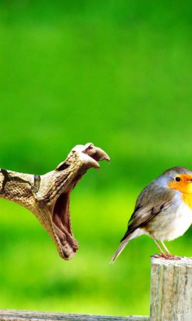 95168 download wallpaper Animals, Bird, Snake, Danger, Grin, Stump screensavers and pictures for free