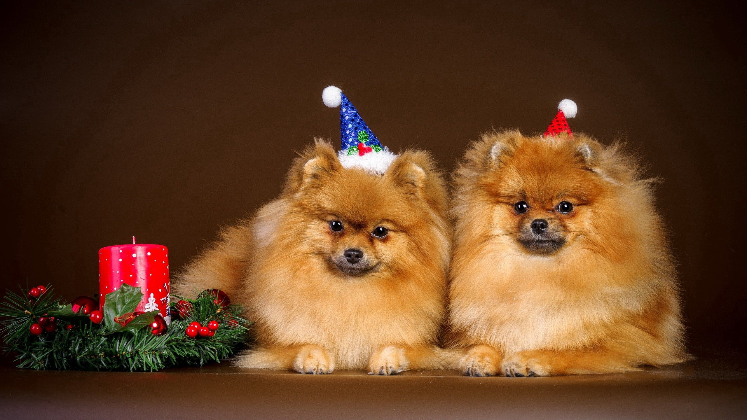 100207 download wallpaper Animals, New Year, Couple, Pair, Christmas, Puppies, Outfit, Attire screensavers and pictures for free