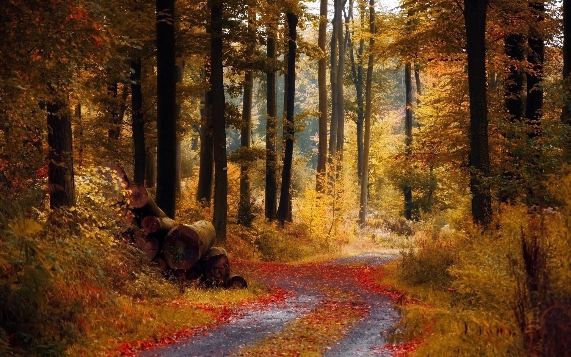 26699 download wallpaper Landscape, Trees, Roads, Autumn, Leaves screensavers and pictures for free