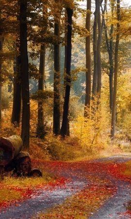 26699 скачать обои Пейзаж, Деревья, Дороги, Осень, Листья - заставки и картинки бесплатно