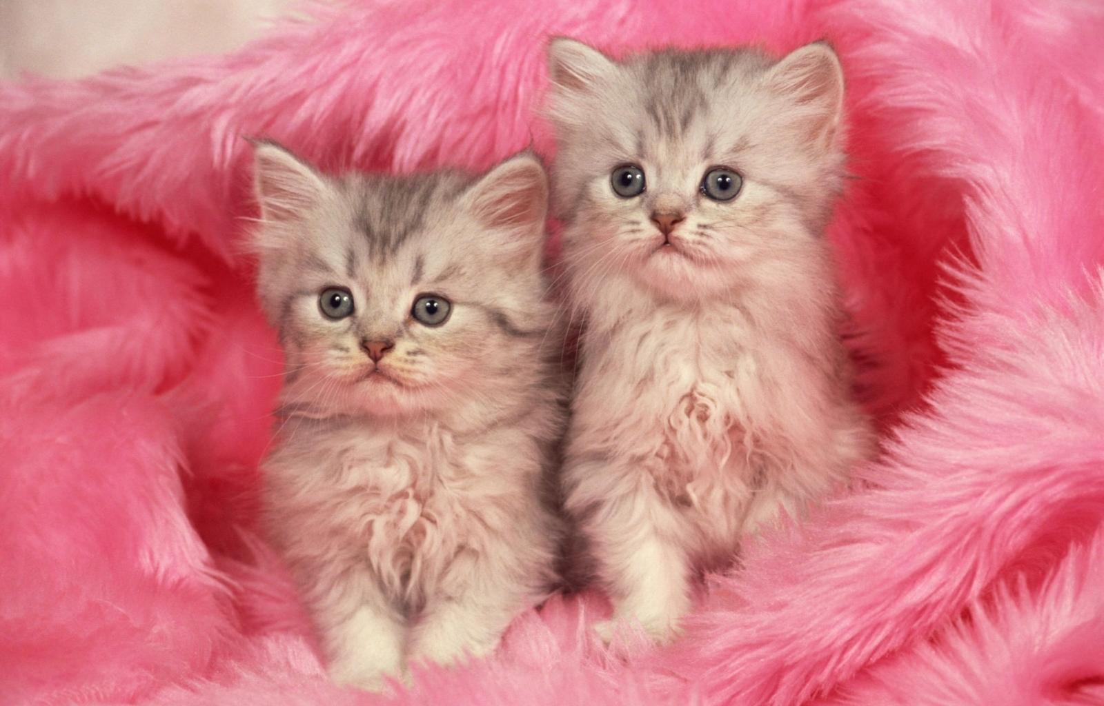 3069 скачать обои Кошки (Коты, Котики), Животные - заставки и картинки бесплатно