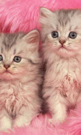 3069 скачать обои Животные, Кошки (Коты, Котики) - заставки и картинки бесплатно