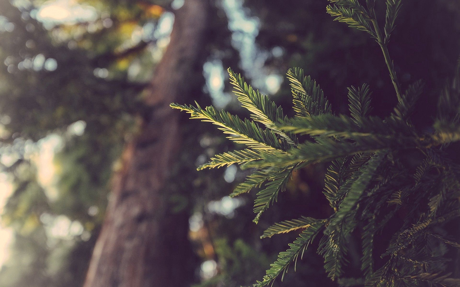 134970 download wallpaper Nature, Plant, Branch, Shadow screensavers and pictures for free