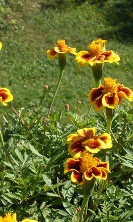 3671 descargar fondo de pantalla Plantas, Flores: protectores de pantalla e imágenes gratis