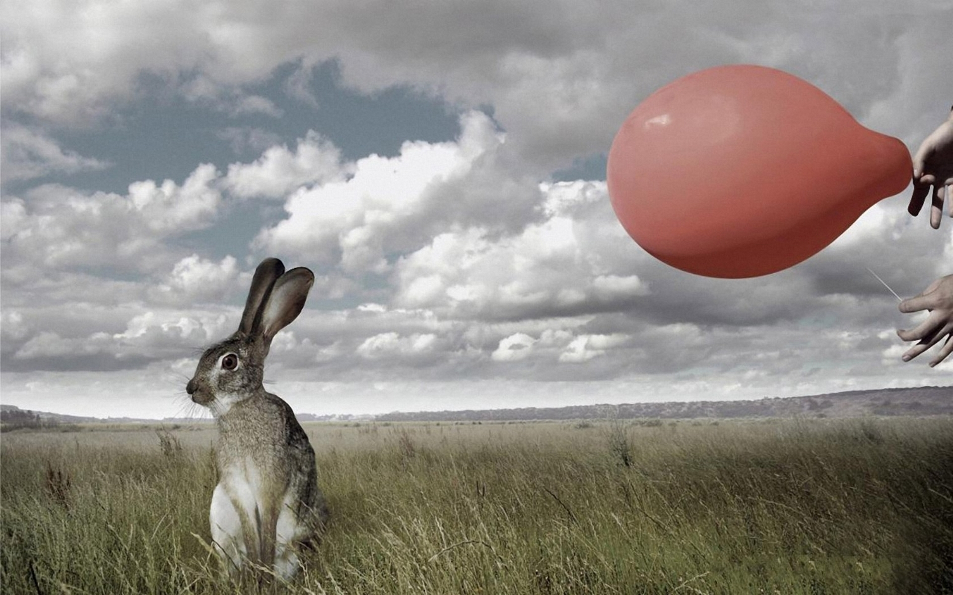 27163 download wallpaper Animals, Rabbits screensavers and pictures for free