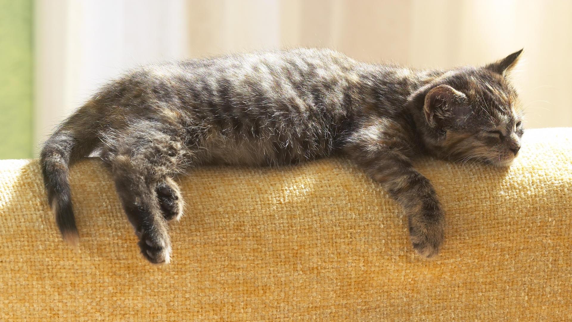 25366 скачать обои Животные, Кошки (Коты, Котики) - заставки и картинки бесплатно