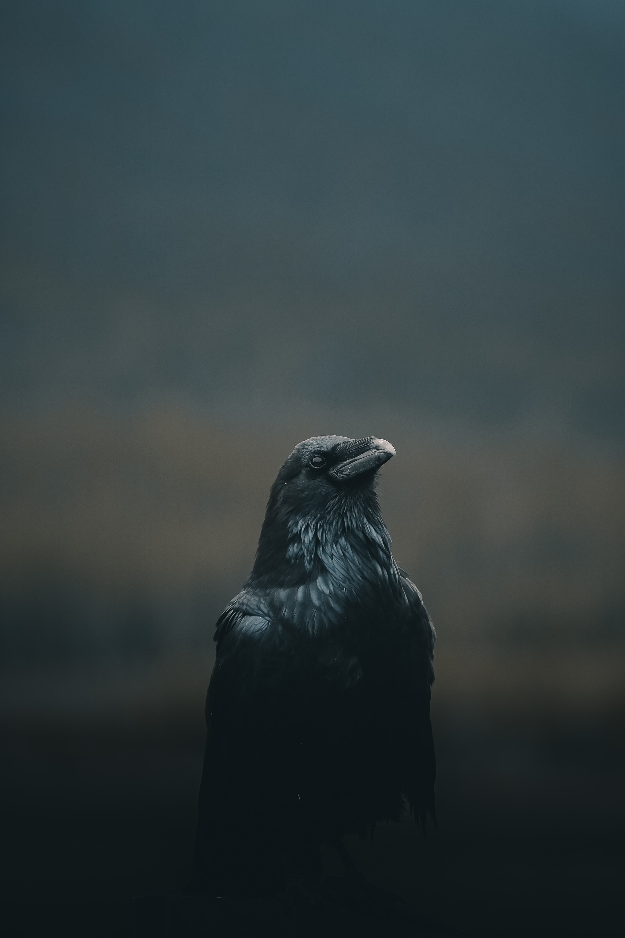 68558 Screensavers and Wallpapers Bird for phone. Download Animals, Dark, Bird, Crow pictures for free