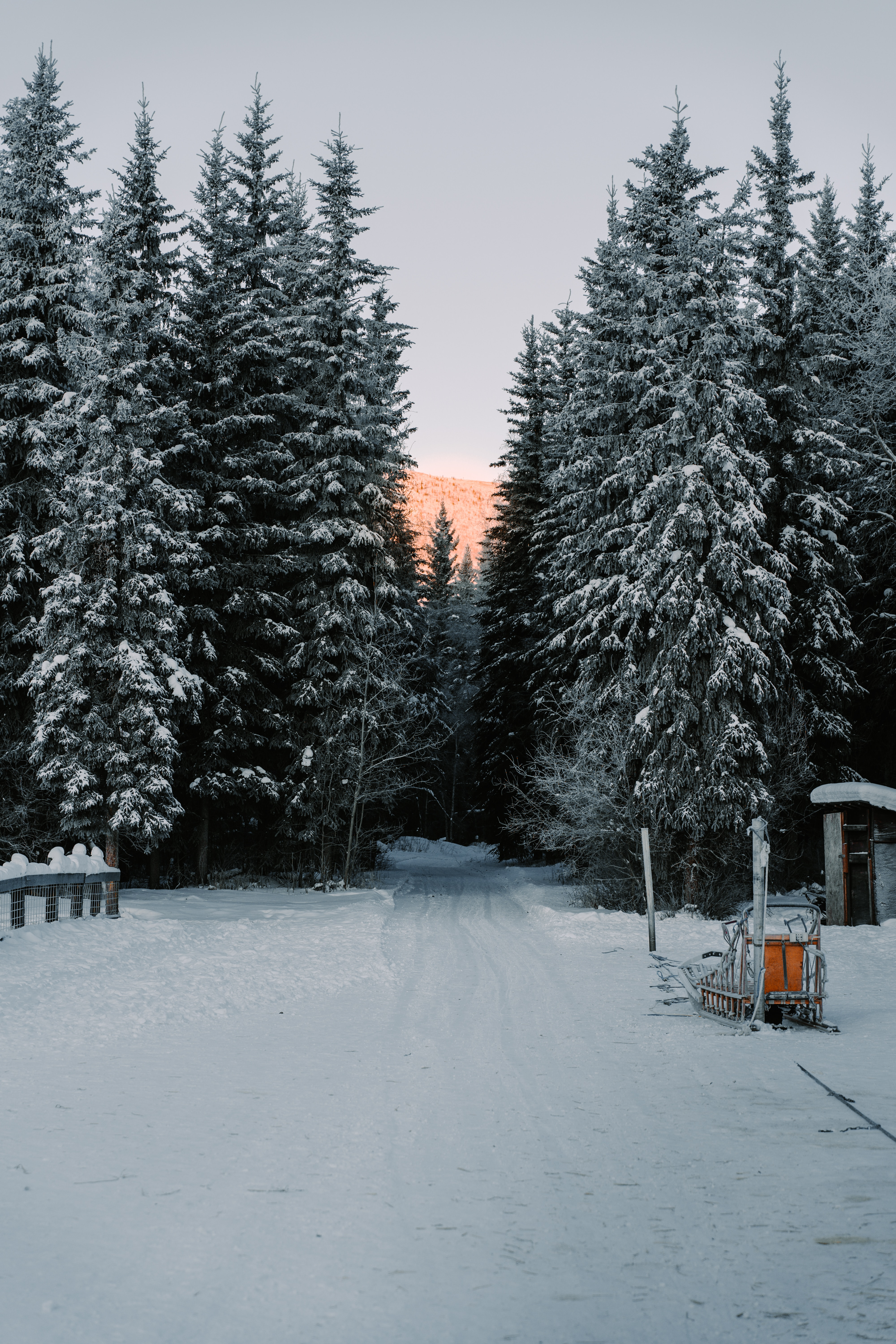 143116 download wallpaper Trees, Snow, Road, Winter, Nature screensavers and pictures for free