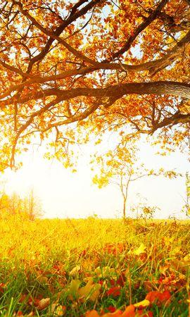 24512 скачать обои Растения, Пейзаж, Деревья, Осень, Листья - заставки и картинки бесплатно