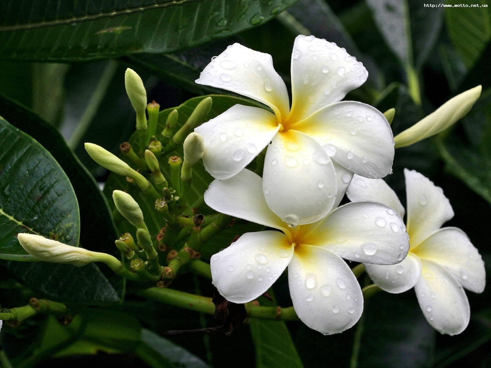 6186 скачать обои Растения, Цветы - заставки и картинки бесплатно