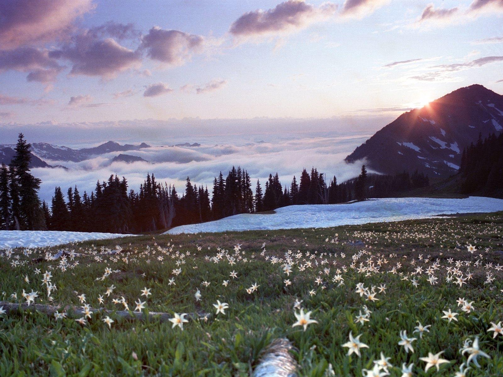 795 скачать обои Растения, Пейзаж, Цветы, Небо, Горы - заставки и картинки бесплатно