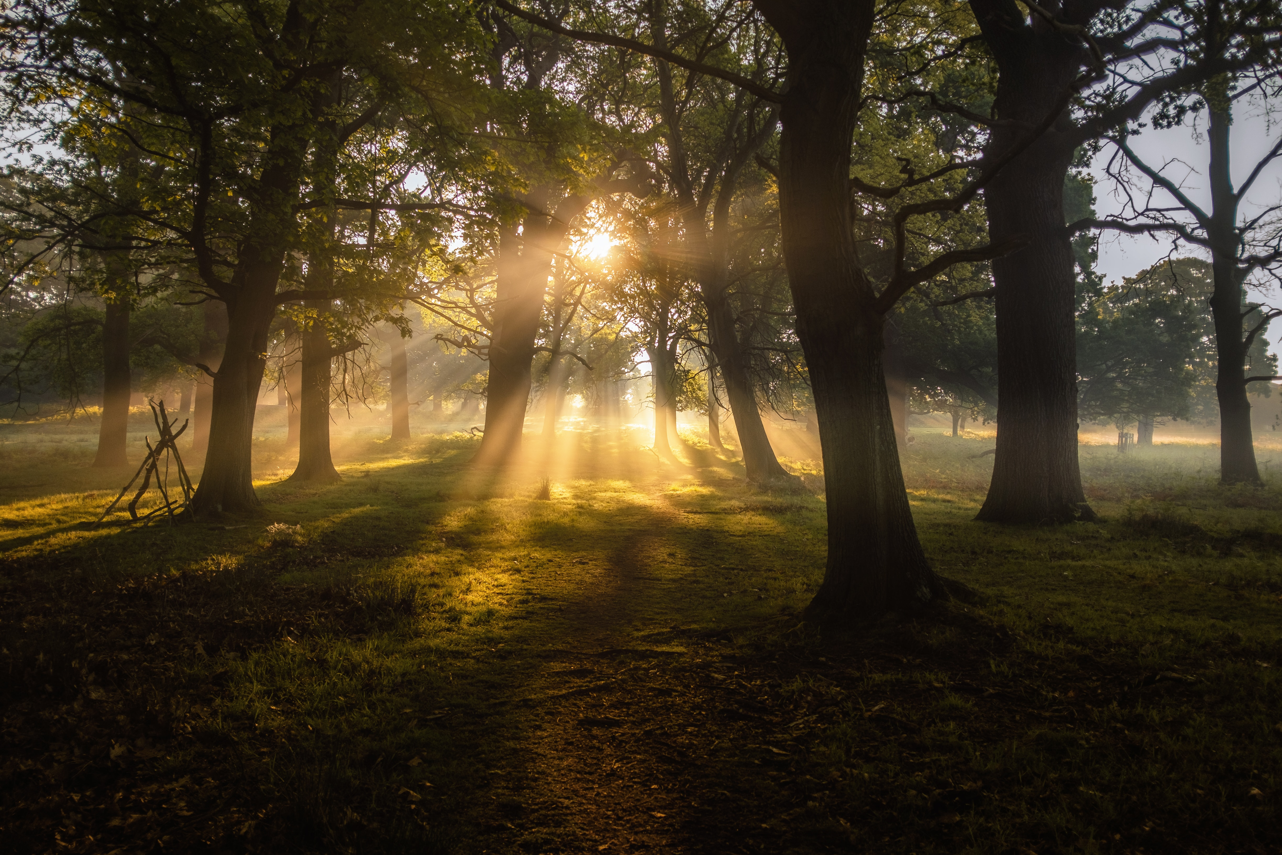 98682 Screensavers and Wallpapers Beams for phone. Download Nature, Trees, Sun, Dawn, Beams, Rays, Fog pictures for free