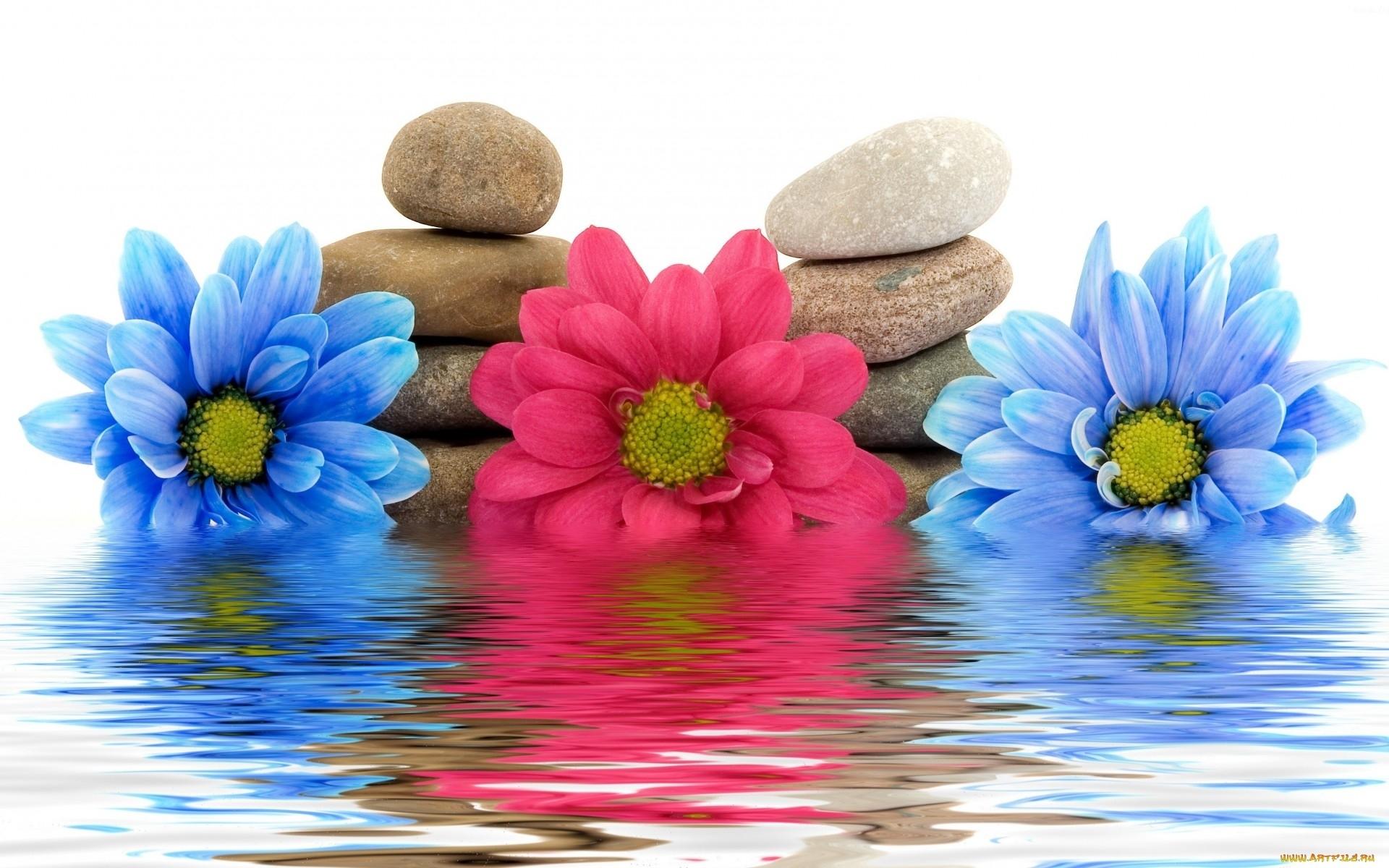 24565 télécharger le fond d'écran Plantes, Fleurs, Eau, Noyaux, Still Life - économiseurs d'écran et images gratuitement