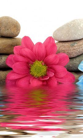 24565 descargar fondo de pantalla Plantas, Flores, Agua, Stones, Naturaleza Muerta: protectores de pantalla e imágenes gratis