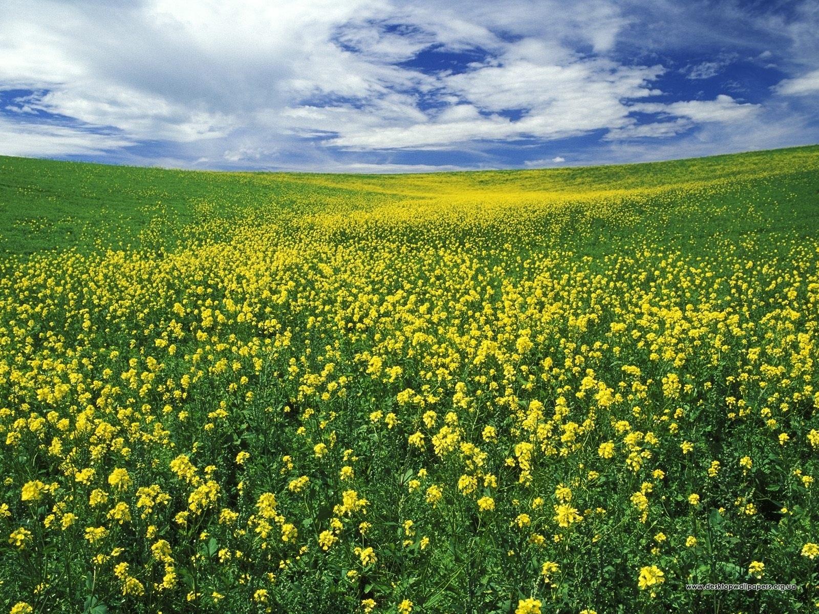 4408 скачать обои Пейзаж, Цветы, Небо - заставки и картинки бесплатно