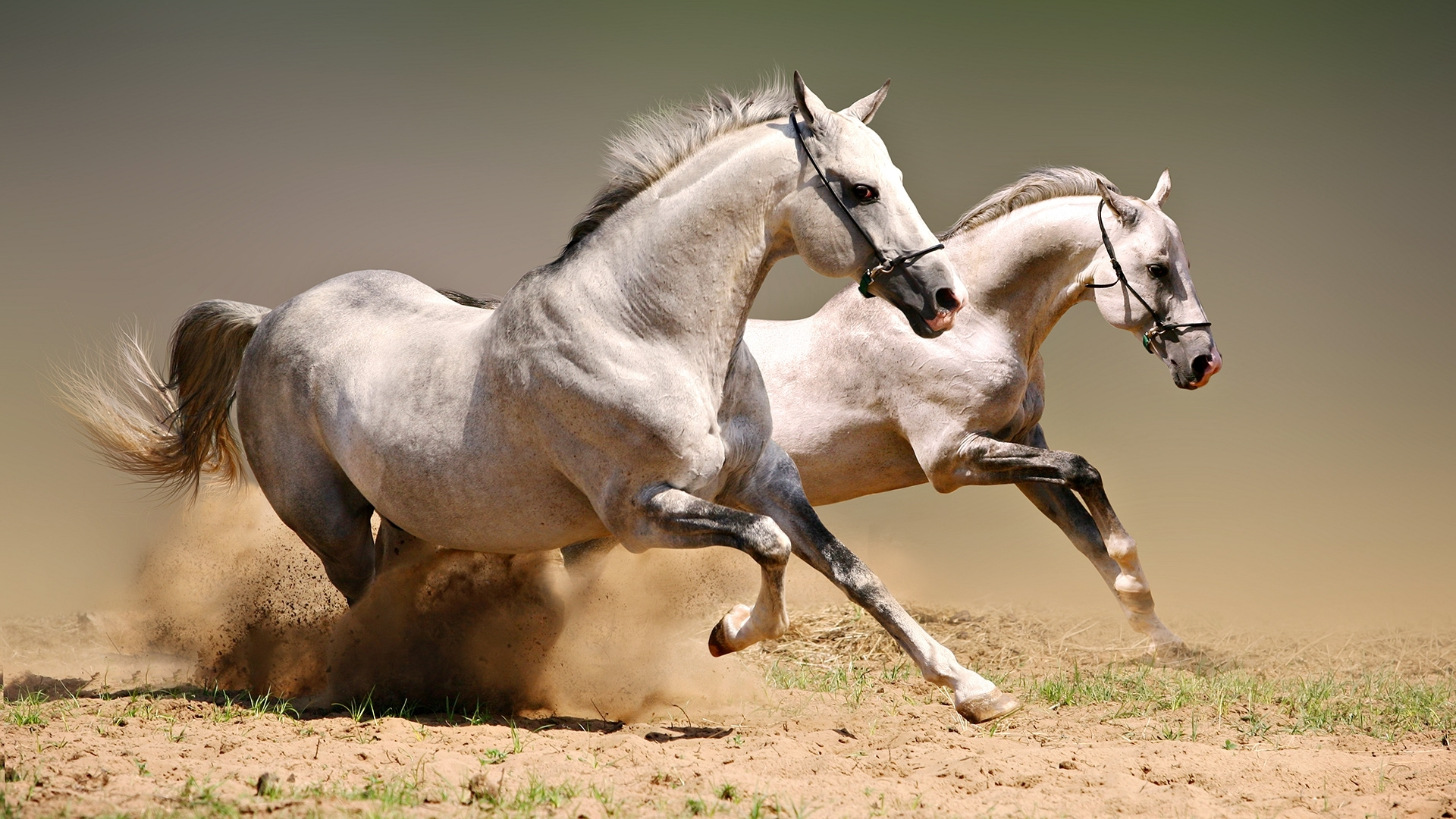 46842 download wallpaper Animals, Horses screensavers and pictures for free